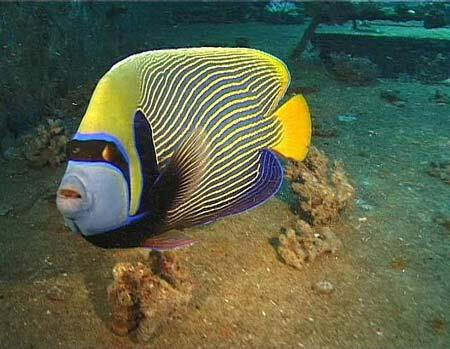 красное море рыбы фото.